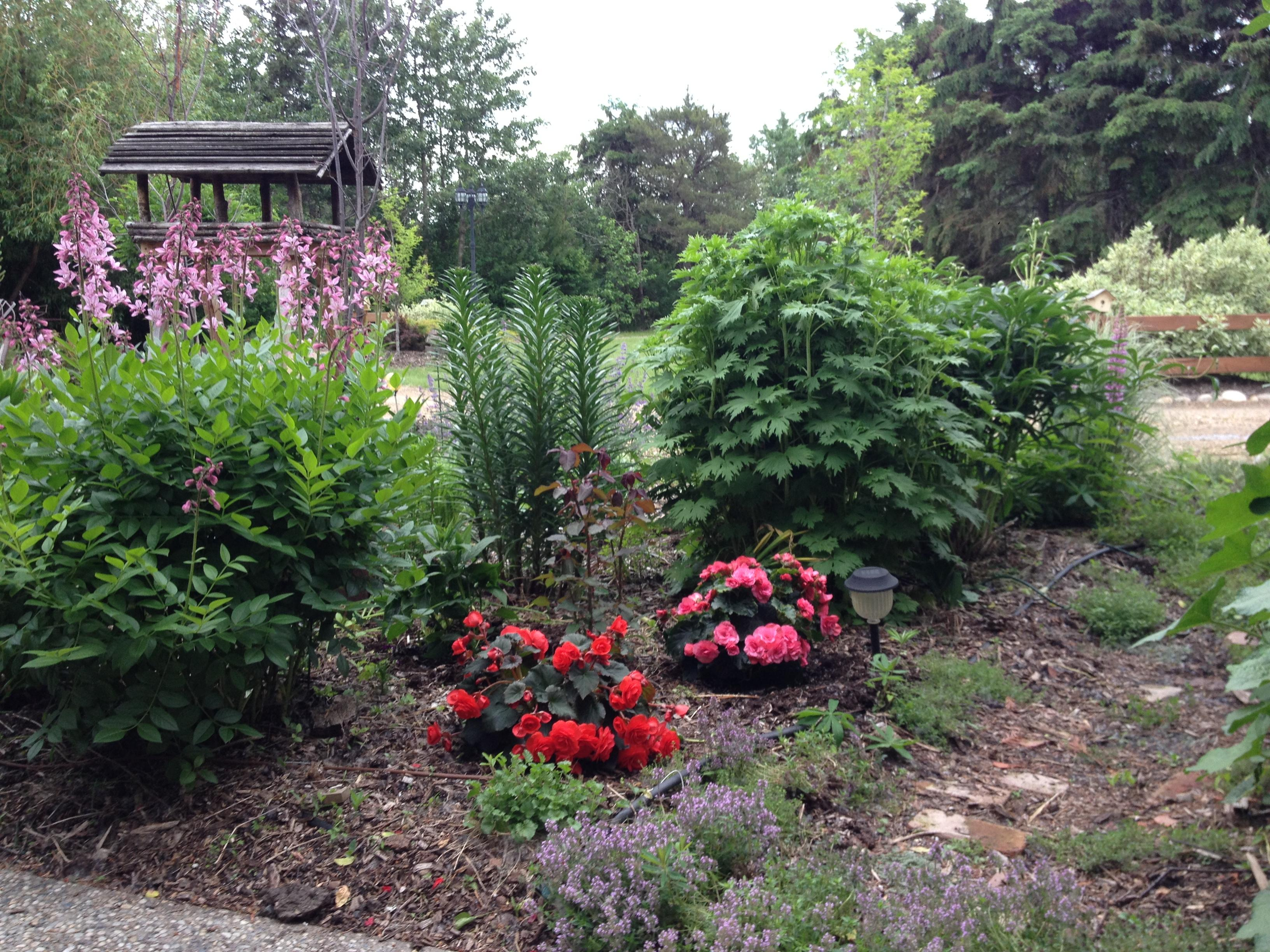 How Annuals & Perennials Work Together
