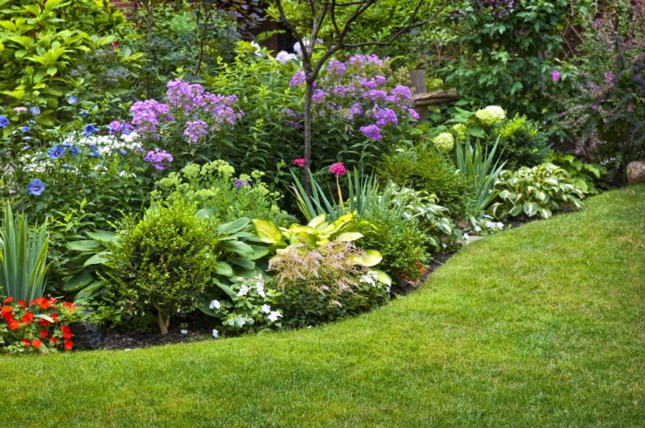 The Differences Between Annuals and Perennials