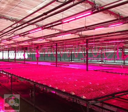 How to Use Supplemental LED Grow Lights